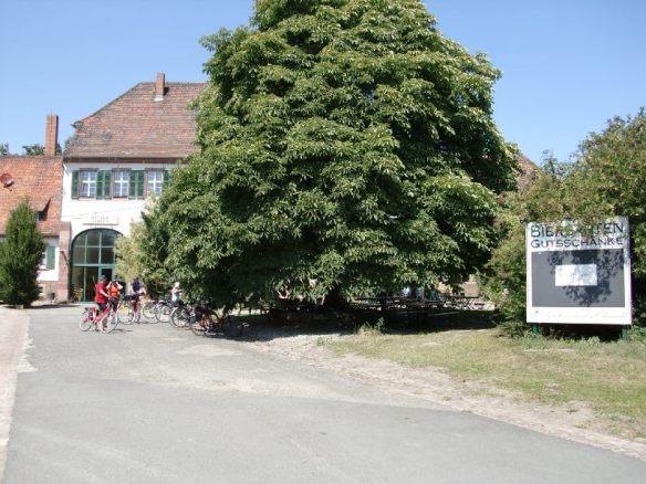 Baum mit angeschlossenem Biergarten