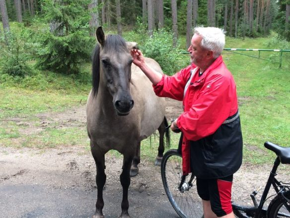 Frei lebendes Pferd
